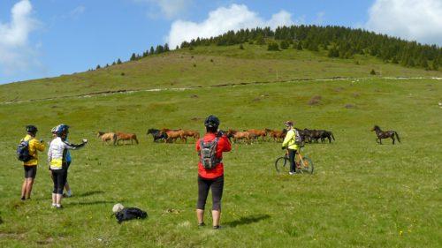 Galería de fotos Bulgaria, Rodope en bici de montaña-9